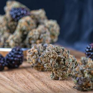 migliori cime buds cannabis indoor Como